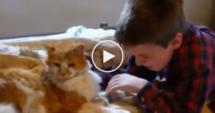 He Lost His Best Friend Cat, But Then Days Later… Now Watch The Reaction When They're Reunited!