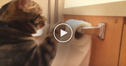 What This Cat Does To Apologize After Using All The Toilet Paper Is Completely Unexpected…LOL