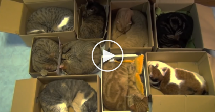 They Wanted To Organize Their Cats, So They Came Up With THIS Genius Idea! AHHH, So Adorable…