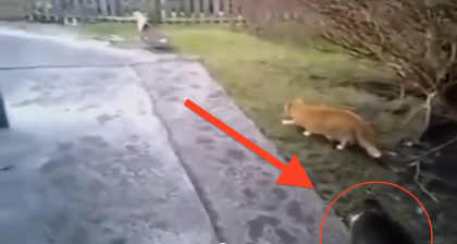 He Was Sneaking Up On A Duck, But Never Expected His Prankster Friend Would Show Up… OMG!