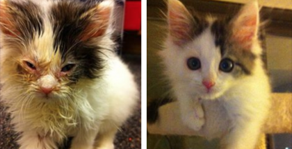 These 19 Before & After Rescue Pictures Prove That Love Can Change A Cat's Life, Unbelievable…