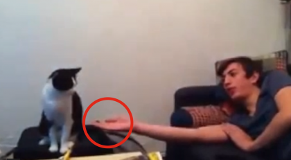 He Puts Out His Hand And Gets The BEST Response Ever… I Had NO Clue Cats Did This!?