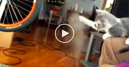 These Owners Plug In A New, Mysterious Machine…You'll Never Believe Their Cats Reaction!