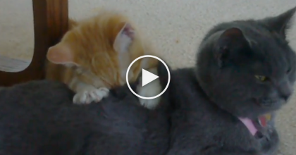 They Were Watching TV, But Got Distracted By This Little Cat Doing Something Adorable…