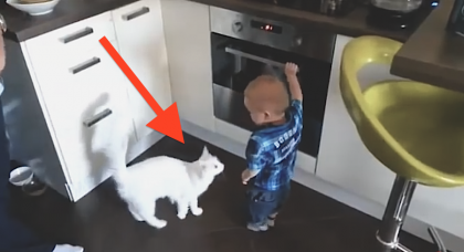 This Cat Notices The Baby Getting Close To The Oven, But Then Does The Unthinkable…WOW