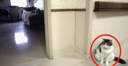 This Cat Walked Into A Nursing Home, But They NEVER Expected THIS To Happen… Unbelievable.