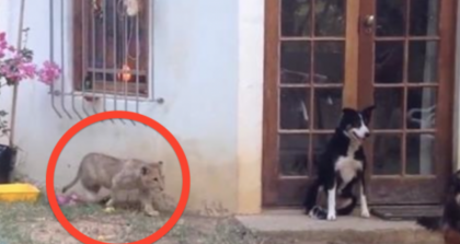 This Dog Has No Idea What's About To Happen, But He's About To Get The Shock Of His Lifetime! LOL