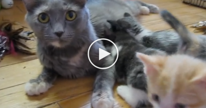 When These Kittens Hear A Familiar Sound, They Know What's Coming Next… ADORABLE