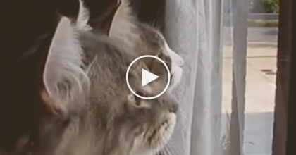 When You See What These Cats Are Saying, You'll Laugh Your Face Off! HILARIOUS…