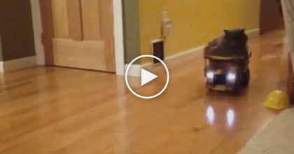Whenever They Bring Out The Toy Dump Truck, This Kitty Does Something I'd NEVER Expect…