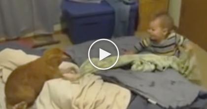 Baby Tries To Grab His Blanket, But Now Watch The Cats Reaction When He Sees It… LOL!!