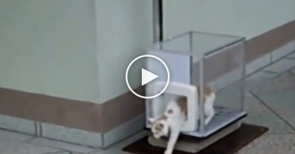 This Cat Goes Inside A Glass Box, But When I Realized What It Was, I Couldn't Believe My Eyes…