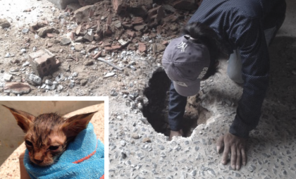 They Heard A Kitten Meowing, So They Started Digging. What They Found Next Broke My Heart…