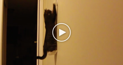 Kitty Knows How To Save Electricity Like A PRO… Just Watch What He Does, OMG.
