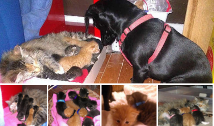This Homeless Cat Came With An Adorable Surprise, But What The Dog Did Is Amazing!