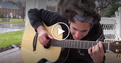 He Started Playing His Guitar, But How The Cat Reacts … Just Watch, This Is Very Sweet, AWW!!