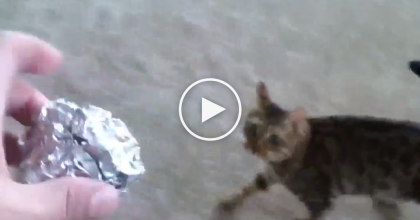 He Throws This Ball Of Aluminum Foil, But Then… Watch What The Cat Does Next, OMG.