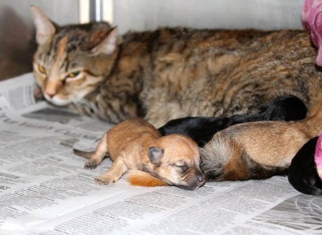 mama-cat-does-something-very-special-for-some-abandoned-puppies