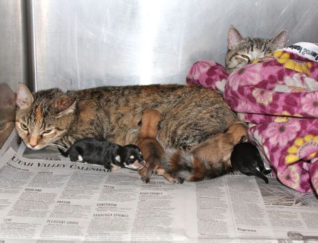 mama-cat-does-something-very-special-for-some-abandoned-puppies2