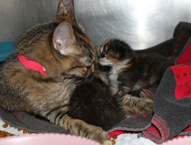 mama-cat-does-something-very-special-for-some-abandoned-puppies3
