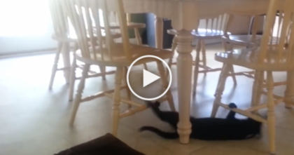 They Saw Their Cat Under The Table, So They Took A Closer Look… I CAN'T Believe What He's Doing!