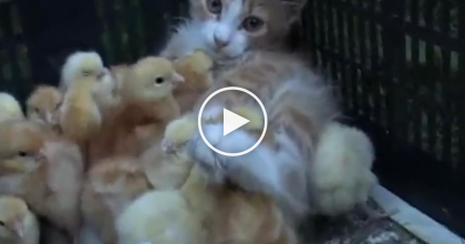 One Look Inside This Box And You'll Find The Cutest Thing Ever… Just Watch And See, PRICELESS.