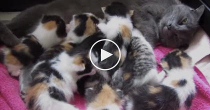 They Rescued This Mama Cat And Her 8 Kittens, But Never Expected What They Saw! AMAZING…