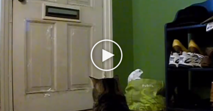 This Cat Waits Every Day At 12:00, But Just Wait Till You See The Reason Why… Unbelievable!