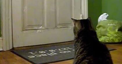 Cat Waits Every Day At 12:00, But Just Wait Till You See The Reason Why… This Is Unbelievable!