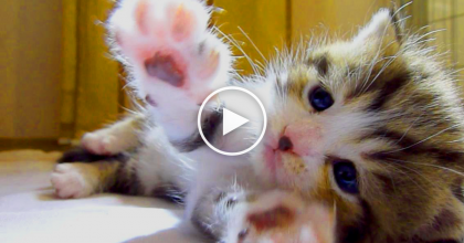 "When You See What This Kitten Is Doing With His Paws, You'll ""AWW"" Out Loud."