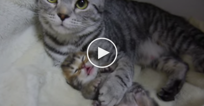 This Kitten Was Having A Scary Dream, But Just Watch The Mother Kitty… SWEETEST Ever!!