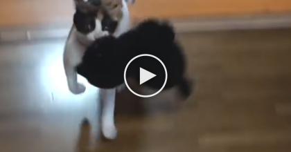 They Gave This Kitty A Large New Toy, But You Gotta See His Reaction… Oh My Goodness!!