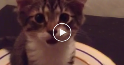 Kitten Wakes Up From Nap In A Bowl, But The Next Thing You Hear… It's PRICELESS.