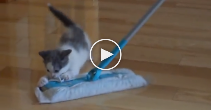 This Little Kitten Notices A Swiffer, But What He Does Next?! You Gotta See It…