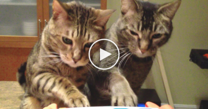 When You See What These Cats Do With Their New Toy, You Won't Stop Smiling.