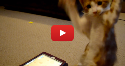 This Kitten Sees Something On The iPad Screen, But You Gotta See His Reaction.