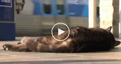 This Cat Lies By The Track Every Day, But When You See The Reason Why…