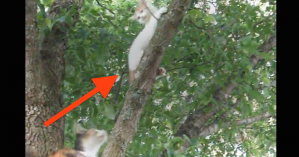 This Kitten Gets Stuck In The Tree, But What Does Mommy Do Next? You Gotta See It…