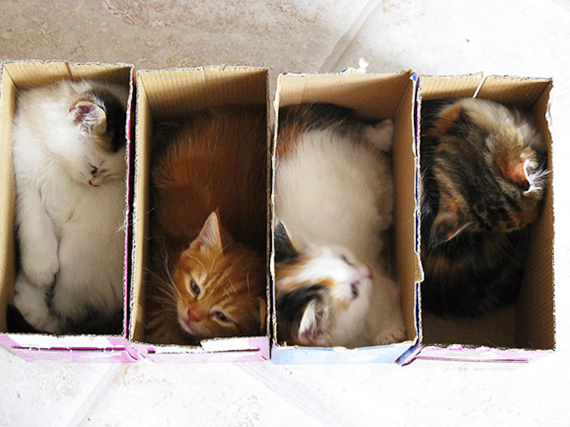 cats-fitting-in-small-spaces-10