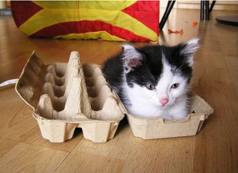 cats-fitting-in-small-spaces-19