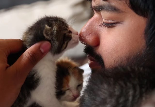 he-took-five-motherless-kittens-and-saved-their-lives-2