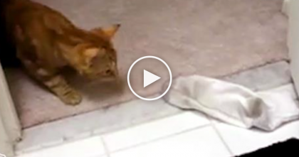 I Can't Hold Myself, OMG… Just Wait Till You See What These Cats Do With Socks!