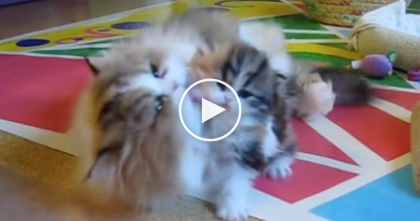 It's Time For A 'Power Wash' But This Kitten's Response Is Most Hilarious… LOL