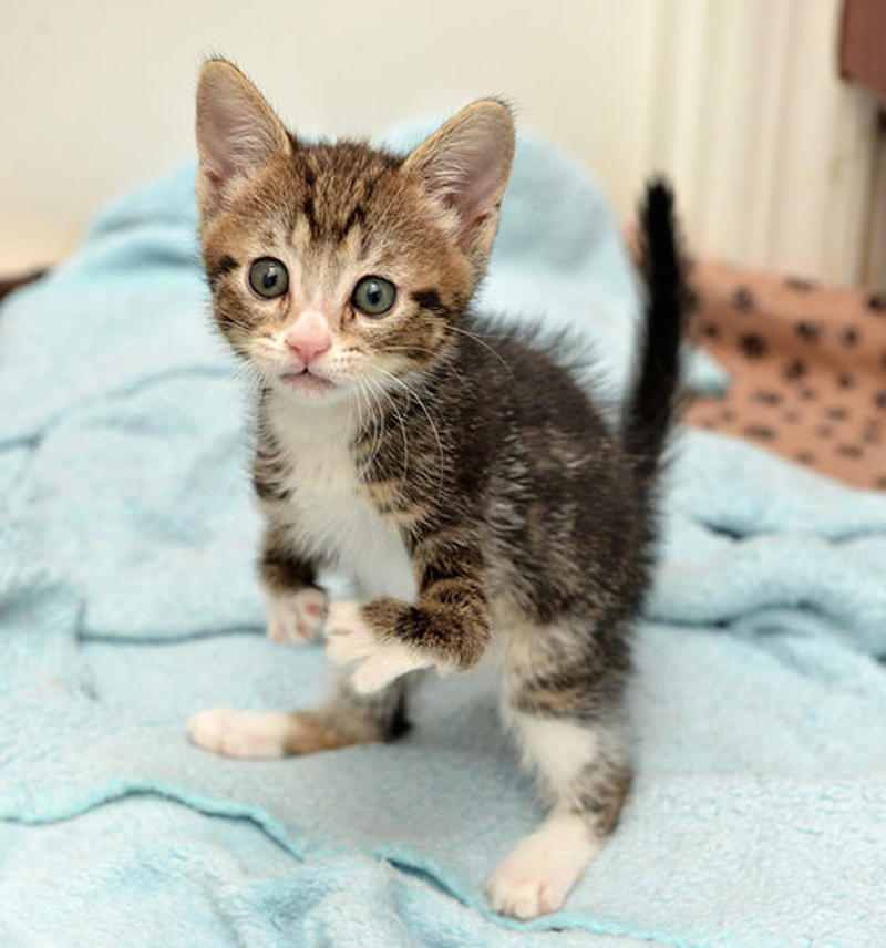 kanga-disabled-kitten-2