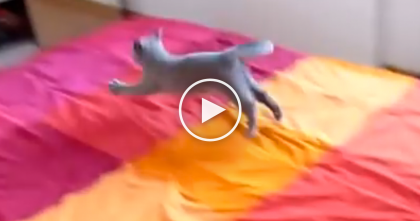 They Let The Kitty On The Bed, But The Surprise They Get…You've Gotta See The Reaction…