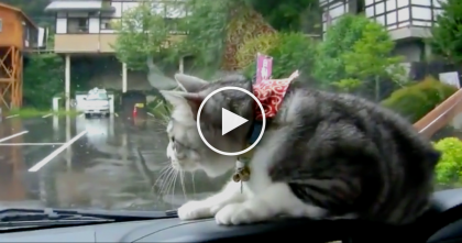 They Turned The Windshield Wipers On, But Watch The Cat's Reaction… It's Just Hilarious!