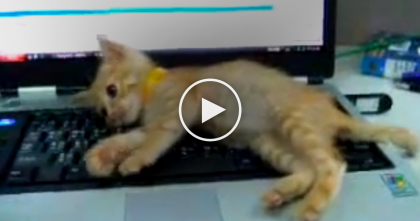 When He Tries To Use The Computer, This Is Happens, LOL… Just Watch And See!