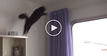 This Cat Plays Fetch, But When You See How He Does It… Now Thats Impressive!