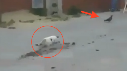 This Cat Sneaks Up On A Bird, But When He Fails? You Gotta See His Reaction… LOL!