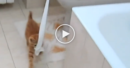 This Cat Won't Leave The Toilet Paper Alone, But Watch What She Does Instead…